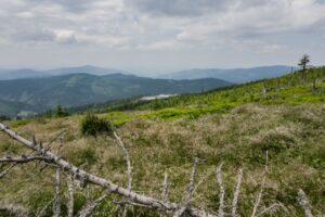Na zielonym szlaku Skrzyczne - Malinowska Skała. Widok w kierunku doliny Brennicy.