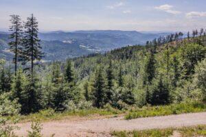 Szeroka leśna droga trawersująca m.in. stoki Malinowa (1114 m n.p.m.). Widok na góry nad Wisłą.