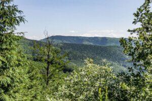 Szeroka leśna droga trawersująca m.in. stoki Malinowa (1114 m n.p.m.). Widok na Baranią Górę (1220 m n.p.m.).