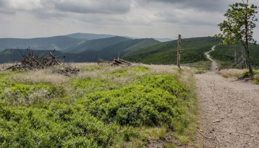 Ta droga to nasz zielony szlak. Najwyższa góra na zdjęciu to Barania Góra (1220 m n.p.m.).
