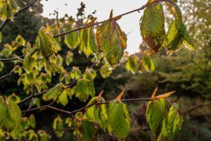 Uwielbiam widok wody kapiącej z drzew... :)