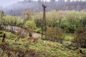 Ślady bytności bobrów nad rzeką Czerną.