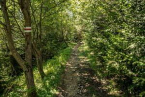 Czerwony szlak w kierunku Mładej Hory.