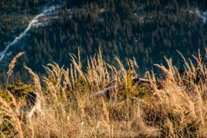 Złote trawy to jeden z moich ulubionych akcentów drugiej połowy roku. :)