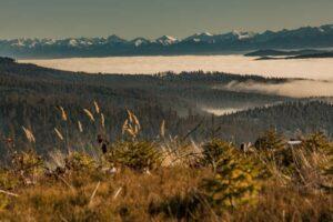 Co za połączenie! Zieleń smreków, złoto traw, czerń lasów i biel śniegu... :)