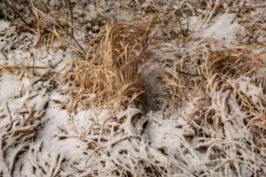 Śnieg i złote trawy na Hali Koziorka.
