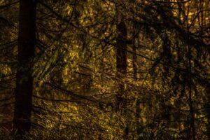 ...i podziwianie uroków popołudniowego lasu. :)
