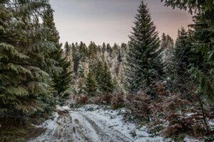 Żółty szlak na Przełęcz Bory Orawskie to wstęp do zimy.
