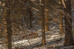 Ciepłe promienie słońca przebijające się prze las... cudny klimat. ;)