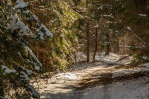 Wijąca się droga w lesie i ciepłe słońce... :)