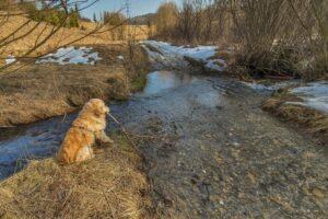 Shadow postanowił pobawić się patykiem nad potokiem Głębokie.