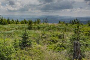Na kopule szczytowej Glinnego (1034 m n.p.m.)... Widok w kierunku południowym. W tle nad Workiem Raczańskim (z lewej strony zdjęcia) ledwo co widoczne szczyty słowackiej Małej Fatry.
