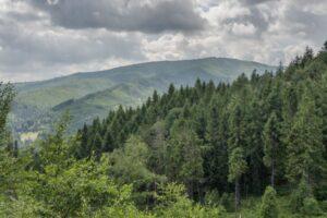 Jej wysokość Barania Góra (1220 m n.p.m.) widziana z okolic czerwonego szlaku.