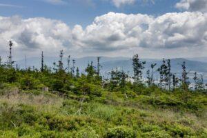 Na kopule szczytowej Glinnego (1034 m n.p.m.)... Widok w kierunku południowym. Widok w kierunku wschodnim. Za drzewami widoczne Pasmo Pilska (1557 m n.p.m.) Beskidu Żywieckiego, a dokładniej Gniazdo Lipowskiej, Rysianki i Romanki.