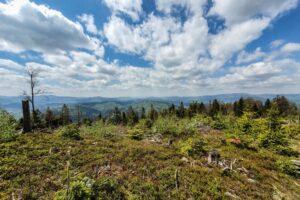 Na kopule szczytowej Suchej Góry. Widok w kierunku Beskidu Śląskiego.