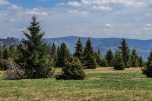 Na kopule szczytowej Suchej Góry. Widok na grzbiet Grubej Buczyny i Krawcowego Wierchu. Gdzieś tam w tle są Tatry... ;)