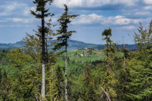 Widok spod Suchej Góry na Halę Boraczą.