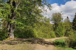 Szlak niebieski między Suchą Górą i Cukiernicą.
