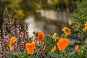 Kwiaty na kładce w sąsiedztwie ratusza.