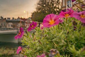 Kwiaty po zachodzie słońca nad rzeką Białą.