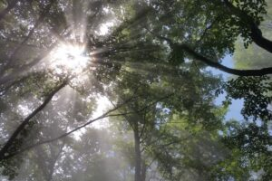 Uwielbiam połączenie beskidzkich lasów, mgieł oraz słońca. ;)