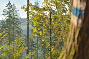 W Beskidach posiadamy naprawdę gęstą sieć szlaków turystycznych dla każdego.
