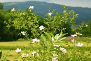 Nie jestem botanikiem, ale przyrodę uwielbiam. ;)