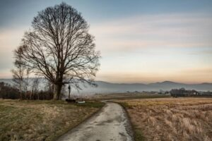 Kapliczka na Studniskach pod samotnym drzewem.
