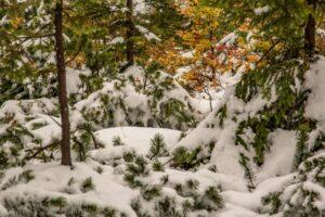 Beskidzki mix jesienno-zimowy.