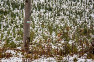 Bardzo lubię taką mozaikę młodych lasów.