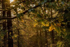 W gęstym lesie klimat był rewelacyjny.
