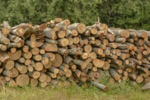 Drewno bukowe.