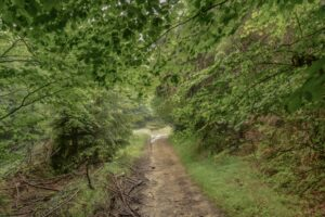 Czerwony szlak niedaleko Kiczorki.