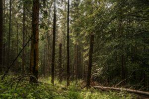 Uwielbiam takie prześwity w wilgotnym lesie!