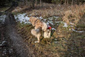 Słowacy wprowadzili pełny lockdown. Przekroczenie granicy wymaga testu. Co na to nasz pies? ;)