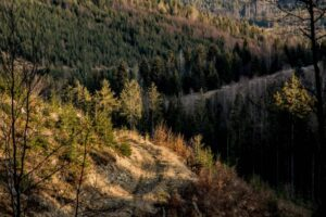 Gra światła i cieni na leśnej drodze w Beskidach.