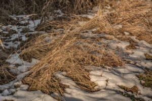 Uwielbiam połączenie złotych traw, bieli śniegu oraz ciepłych promieni zachodzącego słońca.