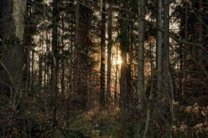 Zachód słońca w lesie też ma swoje uroki!