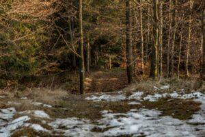 Fragment niebieskiego szlaku z Baraniej Góry do Zwardonia.
