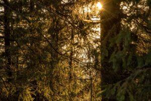 Ciepłe promienie słońca przebijające się prze las... cudny klimat. Po raz kolejny ;)