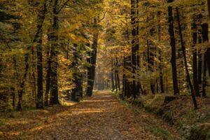 W Cygańskim Lesie...