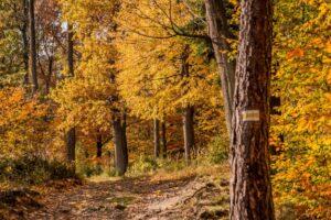Żółty szlak na Kozią Górę.
