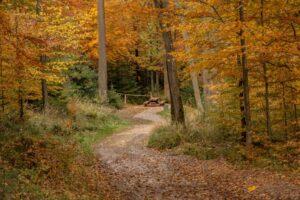 Miejsce odpoczynku przy trasach Enduro Trails Bielsko-Biała.