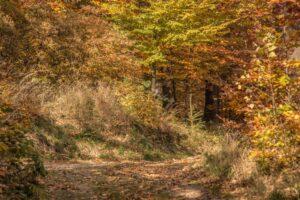 Kwintesencja jesieni w Beskidach. :)