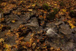 Potok w jesiennej szacie u stóp Koziej Góry.