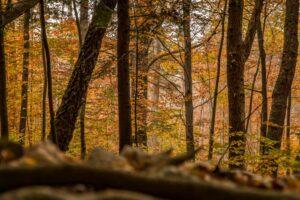 Ostatni rzut okiem na złote lasy. :)